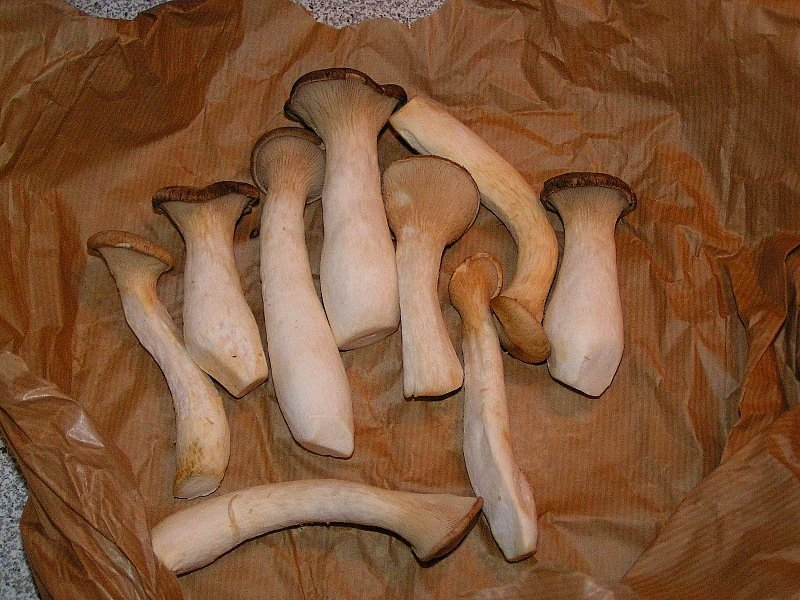 Cardoncelli mushrooms